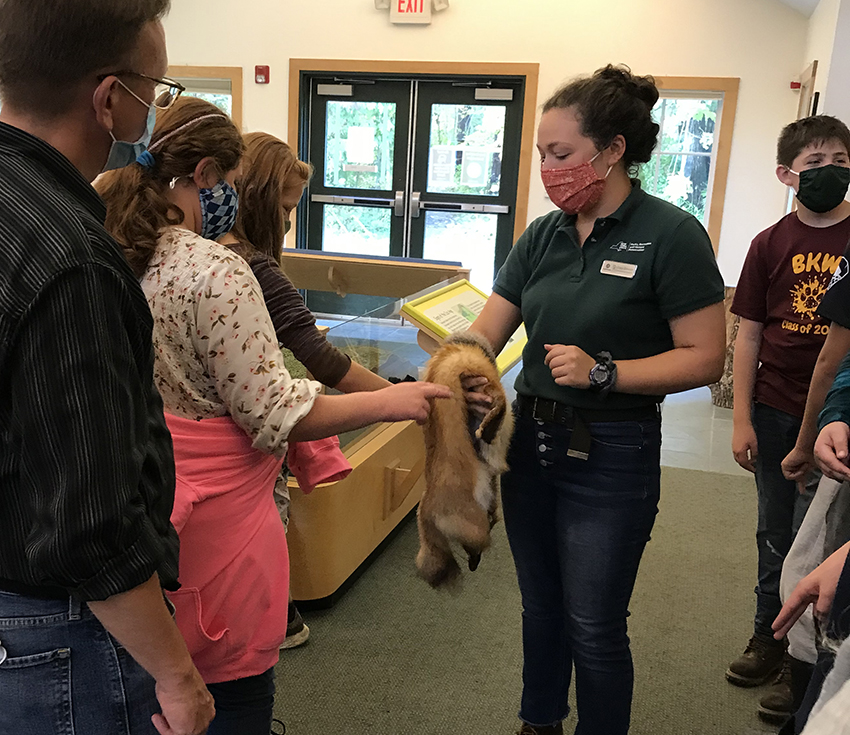 7th grade students learning about a pelt